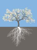 Pommier au printemps avec des racines Photos libres de droits