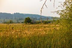 Pommier avec des corneilles se reposant là-dessus à l'extrémité du grand champ photo libre de droits
