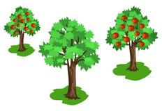 Pommier avec des feuilles de vert et des fruits rouges réglés Photos stock