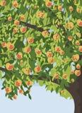 Pommier avec le fond de pommes Image libre de droits