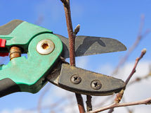 Pommier d'élagage Photo libre de droits