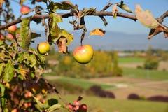 Pommier dans la région de Genève, Suisse images libres de droits