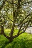 Pommier Dans un jardin image stock