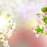 Pommier de floraison contre le ciel ENV 10 Photographie stock
