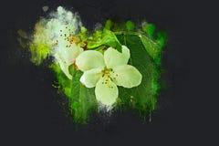 Pommier de floraison en mai Encre acrylique Photographie stock libre de droits