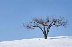 Pommier En hiver Photographie stock