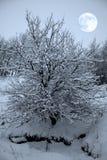 Pommier et pleine lune Images stock