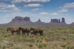 Pomnikowi dolinni konie zdjęcia stock