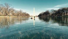 Pomnikowy Mallard Fotografia Royalty Free