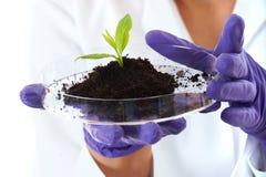 pomocnicza naczynia mieszkania chwytów lab roślina mała Obrazy Royalty Free