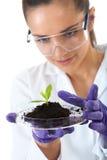 pomocnicza naczynia mieszkania chwytów lab roślina mała Zdjęcie Royalty Free