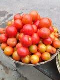 Pomodori fotografia stock