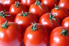 Pomodori immagini stock