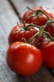 Pomodori Fotografie Stock