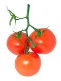Pomodori 7 Fotografia Stock Libera da Diritti