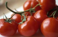 Pomodori immagine stock