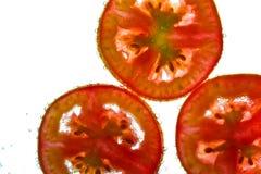 Pomodori in acqua fotografia stock libera da diritti