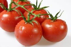 Pomodori bagnati Immagini Stock