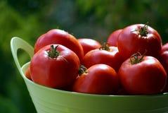 Pomodori in cestino Fotografia Stock