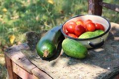 Pomodori, cetriolo e zucchino nella ciotola Immagini Stock