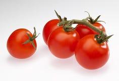 Pomodori ciliegia Fotografia Stock