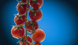 Pomodori ciliegia in acqua con le bolle di aria Fotografia Stock Libera da Diritti