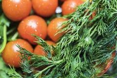 7 pomodori ciliegia con alto vicino dell'aneto e del prezzemolo Fotografie Stock