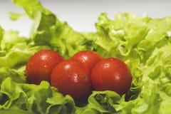 Pomodori ciliegia freschi con insalata Immagine Stock