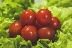 Pomodori ciliegia freschi con insalata Fotografia Stock