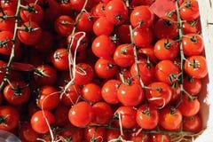 Pomodori ciliegia freschi maturi Fotografia Stock