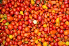 Pomodori ciliegia rossi organici ad un mercato del ` s dell'agricoltore Immagini Stock Libere da Diritti