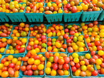 Pomodori ciliegia variopinti Fotografie Stock Libere da Diritti