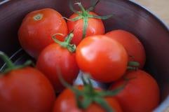 Pomodori in ciotola del metallo fotografia stock libera da diritti
