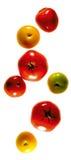 Pomodori Colourful che compongono Immagini Stock Libere da Diritti