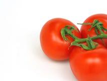 Pomodori con il percorso di residuo della potatura meccanica Immagini Stock