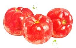 Pomodori con la spruzzata dell'acquerello Alimento sano Stile disegnato a mano immagini stock libere da diritti
