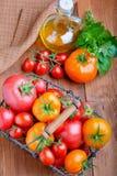 Pomodori con le erbe e l'olio Immagine Stock