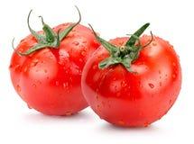 Pomodori con le gocce di acqua isolate sui precedenti bianchi Immagine Stock