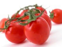 Pomodori contro una priorità bassa bianca immagini stock