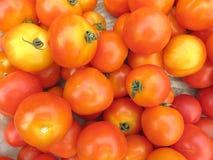 Pomodori crudi Immagine Stock