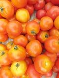 Pomodori crudi Fotografia Stock