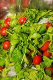 Pomodori crudi dell'alimento nell'acqua Fotografia Stock Libera da Diritti