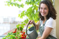 Pomodori d'innaffiatura della giovane donna sul suo giardino del balcone della città - Natur immagine stock