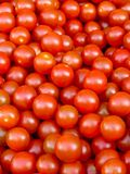 Pomodori del bambino Immagini Stock Libere da Diritti