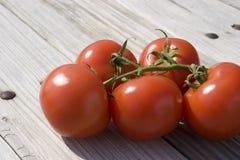 Pomodori del giardino fotografia stock