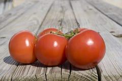 Pomodori del giardino Immagini Stock