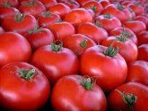 Pomodori del mercato del coltivatore immagini stock libere da diritti