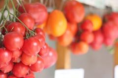 Pomodori del ramoscello Fotografie Stock Libere da Diritti