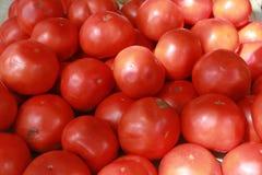 Pomodori del supporto dell'azienda agricola Immagini Stock