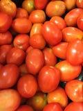 Pomodori dell'inceppamento Immagine Stock